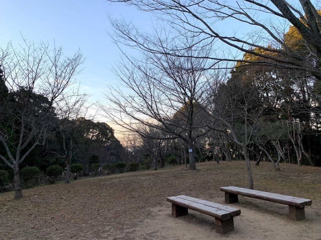 kashiwa-teganuma-weeping-cherry-tree.jpg
