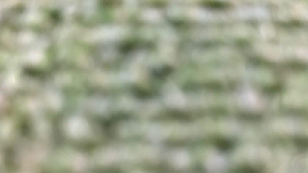 selvim-macro-lens-for-smartphones3.jpg